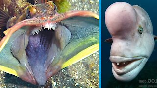 Rare Animals On The World Do You Know?
