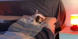 Dog clings to stuffed bear while sleeping