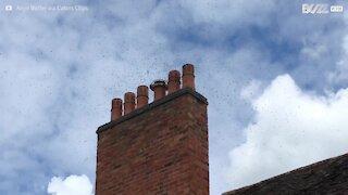 Une centaine d'abeilles a envahi cette maison