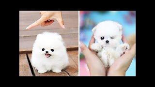 Cute Puppies 😍 Cute Funny Dogs Compilation #1