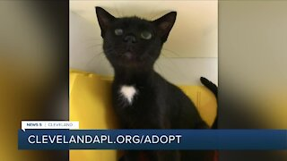 Cleveland APL Pet of the Weekend: Sweet 10-year-old cat named Muffin