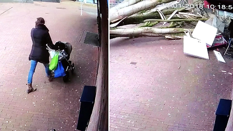 Woman Pushing A Stroller Almost Gets Annihilated By A Massive Tree From Nowhere