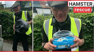 Dustbin man dubbed 'a hero' after saving hamster