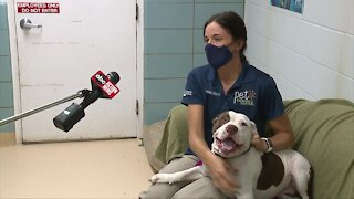 New program helps frightened pets become adoption ready at local shelter