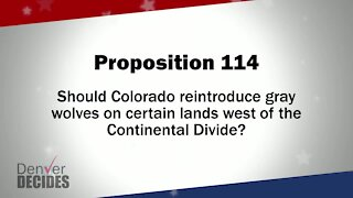 Denver Decides forum: Proposition 114 – Reintroduce Gray Wolves in Colorado
