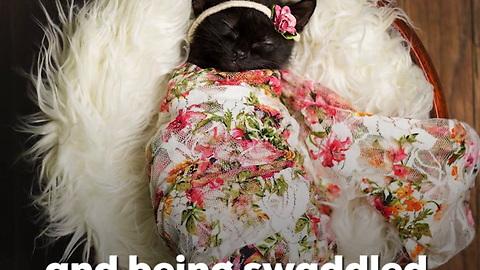 Kitten Gets Her Own Newborn Photoshoot