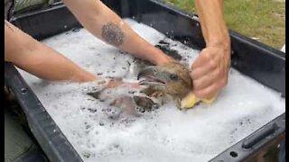 Técnicos dão banho de espuma a águia