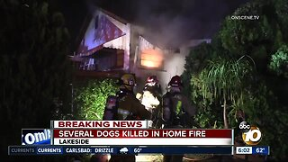 Five dogs killed in Lakeside house fire