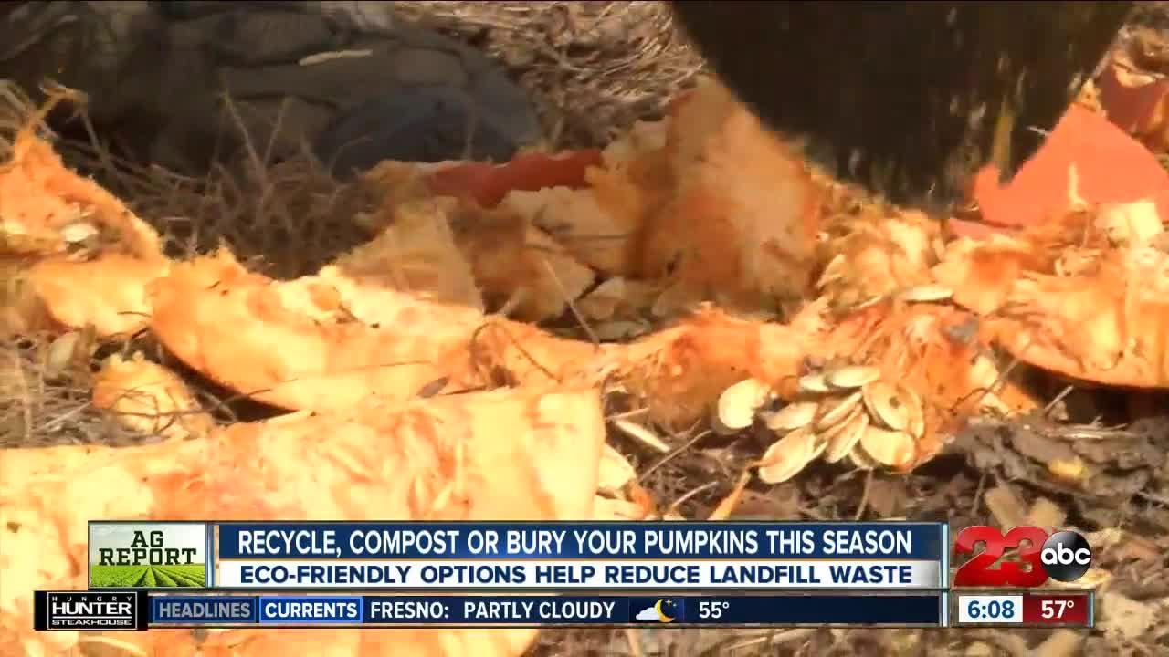 Eco-friendly pumpkin disposal