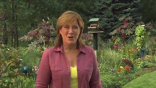 Melinda's Garden Moment - vertical garden