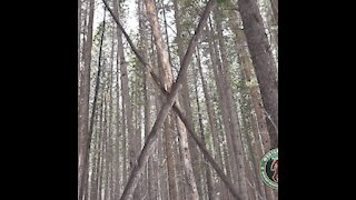 (Sasquatch) Bigfoot, small sign they are here, Western Slope bigfoot