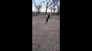 Happy dog Mollie plays catch.