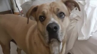Denver7 Gives fund helps family reunite with ailing dog