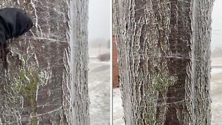 Amazing Footage Shows Frozen Tree Melting From The Inside