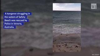 Hero Police Officers Captured on Video Saving Kangaroo from Drowning