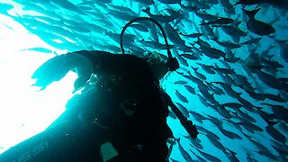 Young diver experiences the thrill of being inside a bait ball