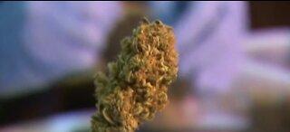 Las Vegas City Council approves drive-thru marijuana dispensary measure