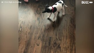 Adorable puppy's hilarious reaction to new collar
