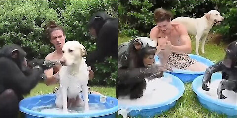 Dog, Monkey and his Owner's Strong Bonding in Bath.