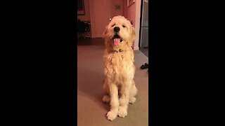 Adorable pooch pounces during playtime