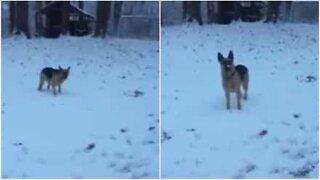 Hund upplever snö för första gången