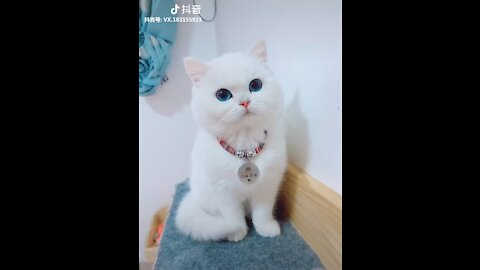 PAT CHALLENGE - Tiktok Cat