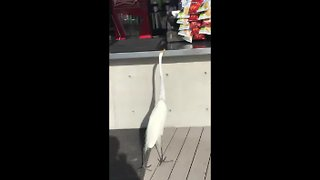 Hungry Begging Bird!