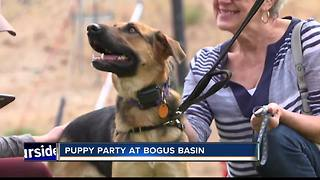 Bogus Basin hosts 'Puppy Party' for National Dog Day