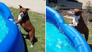 Dog must be bribed in order to get him out of the pool