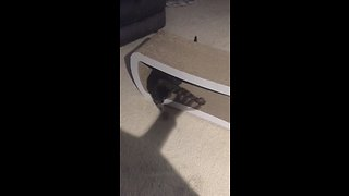 Cat tries to catch and play with shadow hands