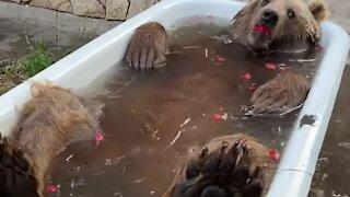 This bear is thoroughly enjoying his bath time