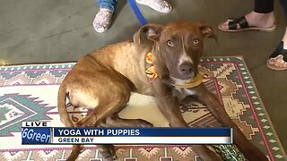Gather on Broadway hosts yoga with puppies to benefit Misfit Mutts Dog Rescue