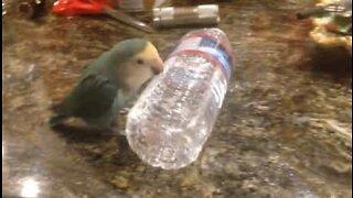 Fugl i kreativ lek med vannflaske