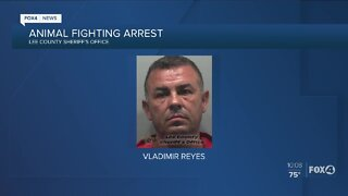 Lee County man arrested for cockfighting in Lehigh Acres