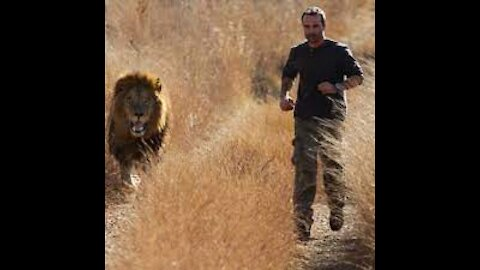 this is why u shound never taunt a caged lion