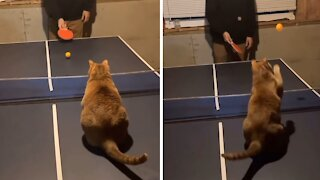 Athletic cat turns out to be a table tennis pro