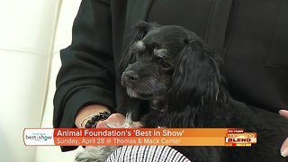 """The Animal Foundation Presents """"Best In Show"""""""