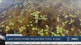 Managing Lake O: Balancing toxic algae