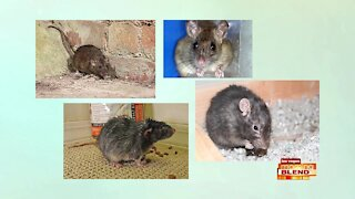 Why Rodents are Still Making Waves in the Valley