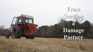 Frost Seeding a Damaged Pasture