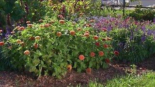 Melinda Myers Garden Moment - Low Maintenance Cut Flower Garden