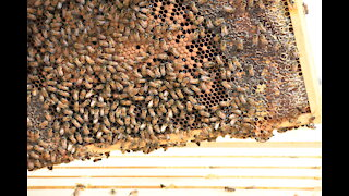 First Hive Inspection