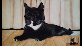 Cat Drawing With Colored