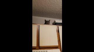BAD kitty!!