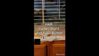 HAIR CATÁSTROFE!