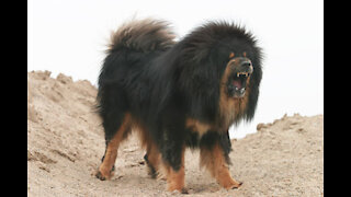 Top 15 Ferocious Dogs You Should Fear the Most