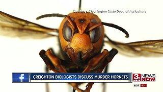 Creighton biologists discuss murder hornets