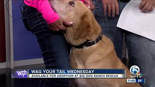 Wag Your Tail Wednesday: Bandit and Bryer each need a forever home