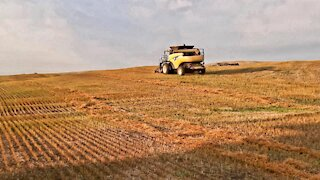 Drought Flaxseed Done