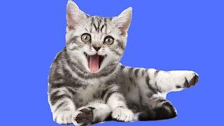 10 Curiosidades Incríveis Sobre Gatos